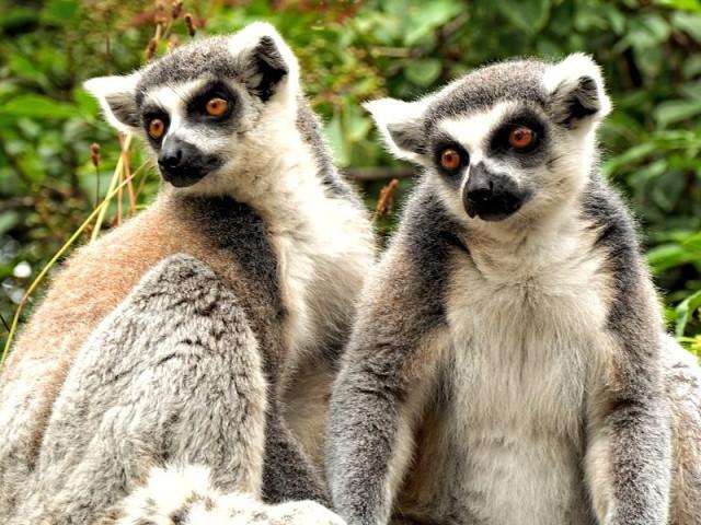EXPLORE MADAGASCAR FUORI ROTTA
