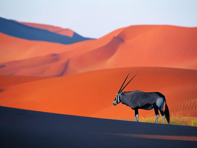 NAMIBIA: TOUR NAMIBIA EXPLORE - 04 APRILE 2020
