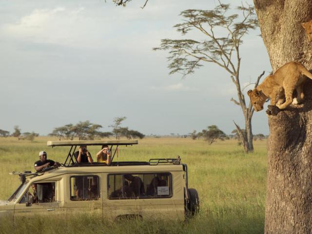 TANZANIA: TOUR TANZANIA WILD