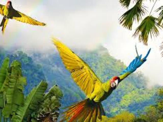 COSTA RICA: TOUR WONDER COSTARICA CON VOLO AGOSTO