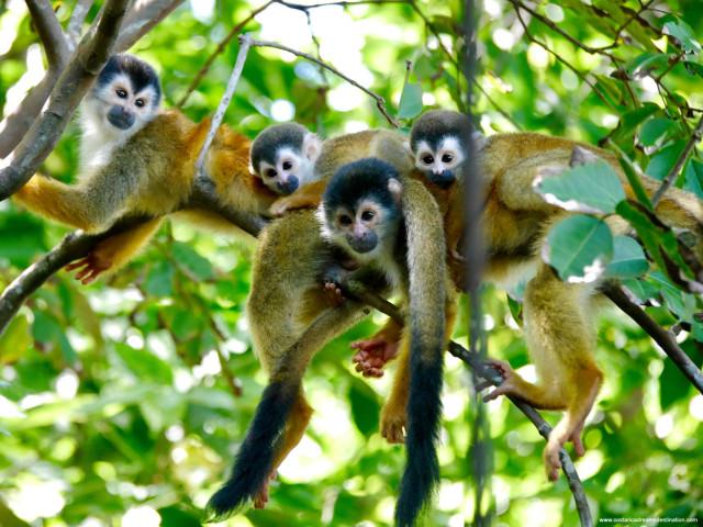 COSTA RICA: TOUR WONDER COSTARICA NOVEMBRE