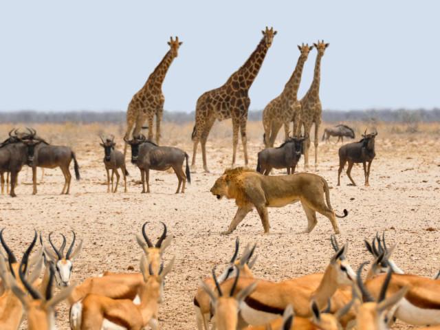 NAMIBIA: TOUR NAMIBIA EXPLORE  03 OTTOBRE