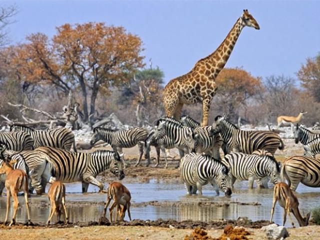 NAMIBIA: TOUR NAMIBIA EXPLORE  MAGGIO