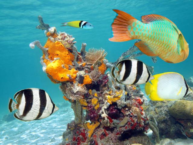 CUBA: TOUR CUBA LIBRE ORIGINAL DICEMBRE