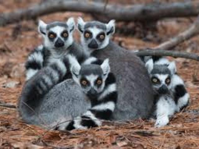 MADAGASCAR: TOUR INSOLITO MADAGASCAR AGOSTO