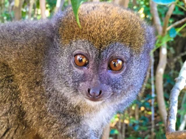 MADAGASCAR: TOUR INSOLITO MADAGASCAR NOVEMBRE CON VOLO