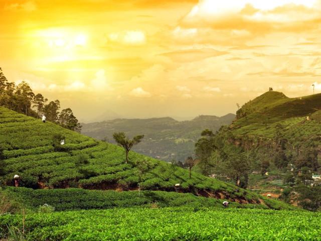 SRI LANKA: Tour Ceylon Classico Novembre