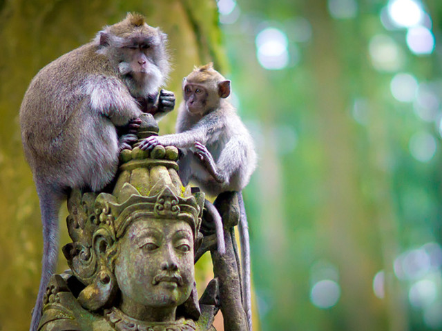 INDONESIA: TOUR EXOTIC AND SWEET BALI NOVEMBRE 2020