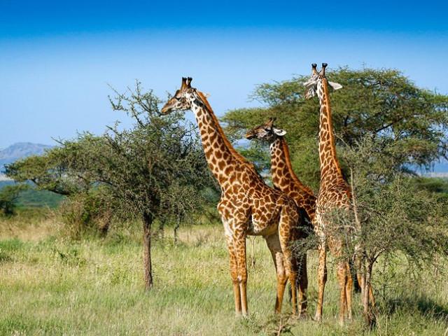 SUDAFRICA: Tour African Explorer Novembre