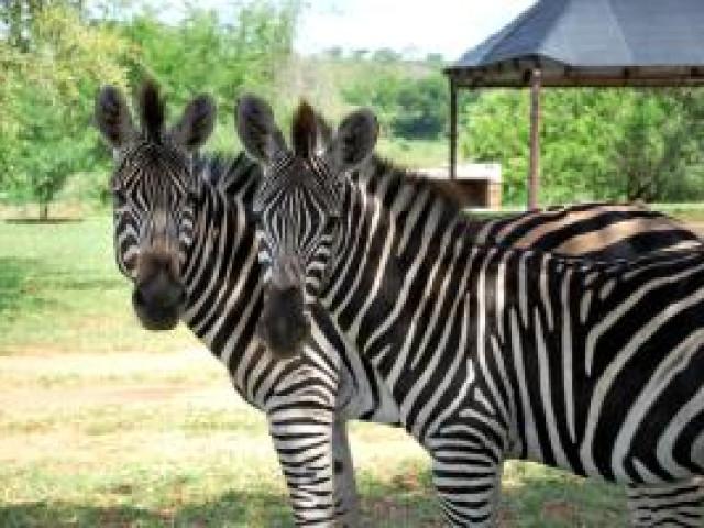 SUDAFRICA: Tour African Explorer Gennaio