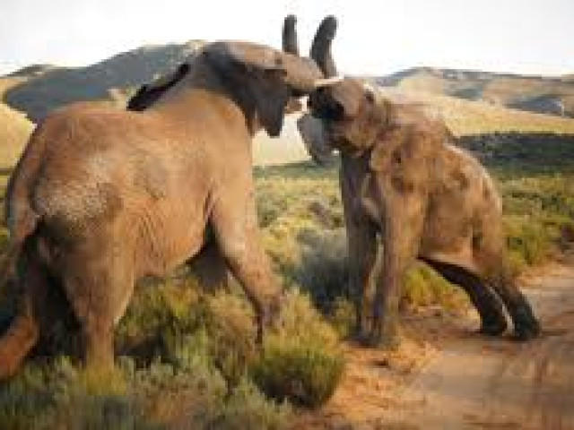 SUDAFRICA: Tour African Explorer Febbraio